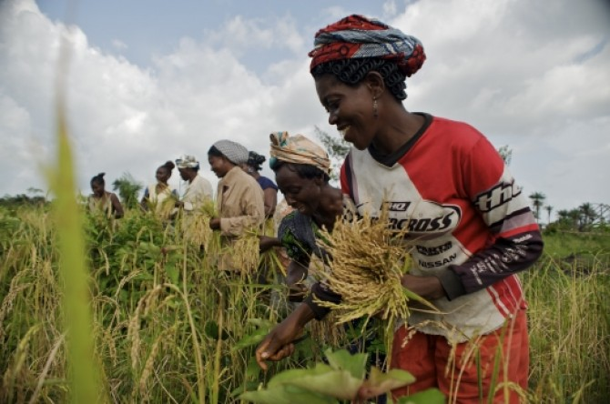 Img : Cote d'Ivoire, Morocco to train 20,000 Ivorian farmers